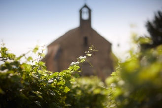 Vines in front of the chapel
