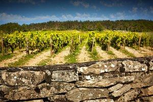 DCC Vines